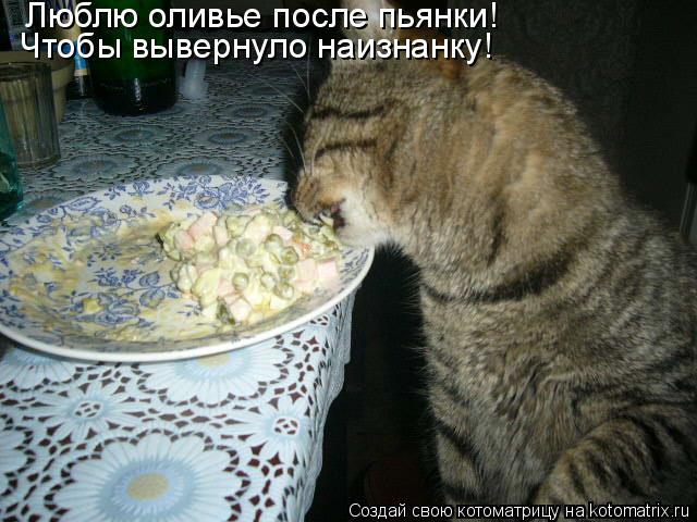 Котоматрица: Люблю оливье после пьянки! Чтобы вывернуло наизнанку!