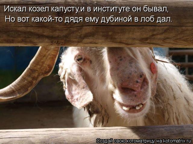 Котоматрица: Искал козел капусту,и в институте он бывал, Но вот какой-то дядя ему дубиной в лоб дал.