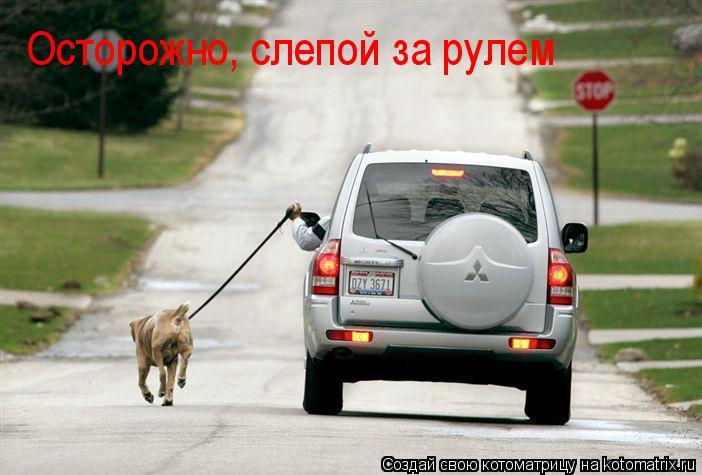 Котоматрица: Осторожно, слепой за рулем