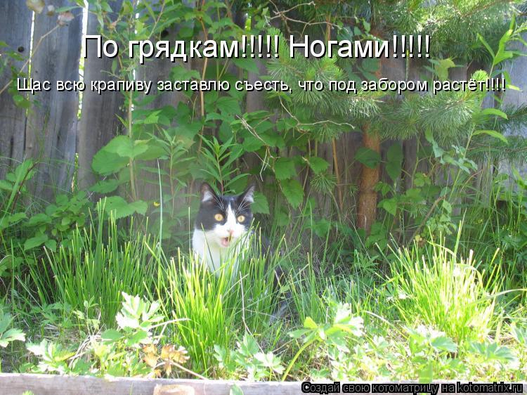 Котоматрица: По грядкам!!!!! Ногами!!!!! Щас всю крапиву заставлю съесть, что под забором растёт!!!!