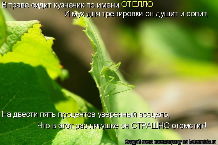 Котоматрица: В траве сидит кузнечик по имени  ОТЕЛЛО И мух для тренировки он душит и сопит,  На двести пять процентов уверенный всецело,  Что в этот раз ля