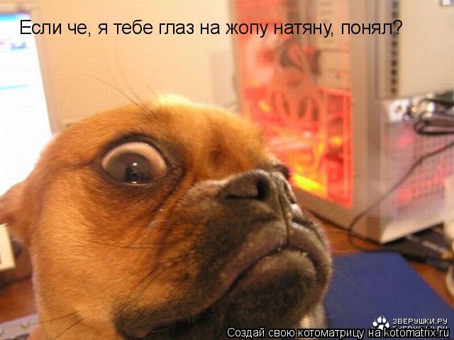 Котоматрица: Если че, я тебе глаз на жопу натяну, понял?