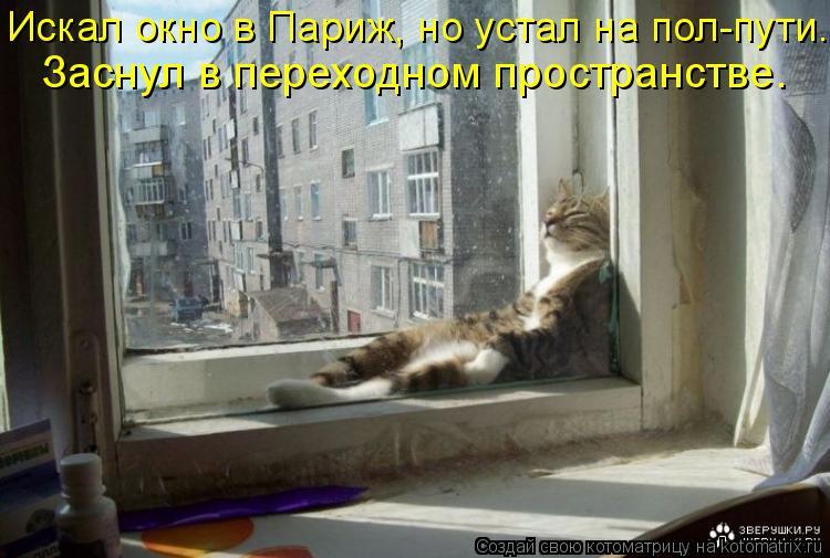 Котоматрица: Искал окно в Париж, но устал на пол-пути. Заснул в переходном пространстве.