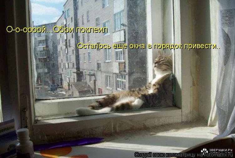 Котоматрица: О-о-оооой...Обои поклеил Осталось еще окна в порядок привести..