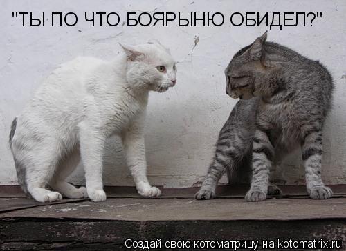 """Котоматрица: """"ТЫ ПО ЧТО БОЯРЫНЮ ОБИДЕЛ?"""""""
