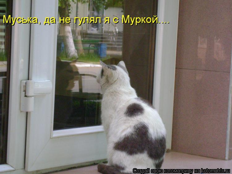 Котоматрица: Муська, да не гулял я с Муркой....