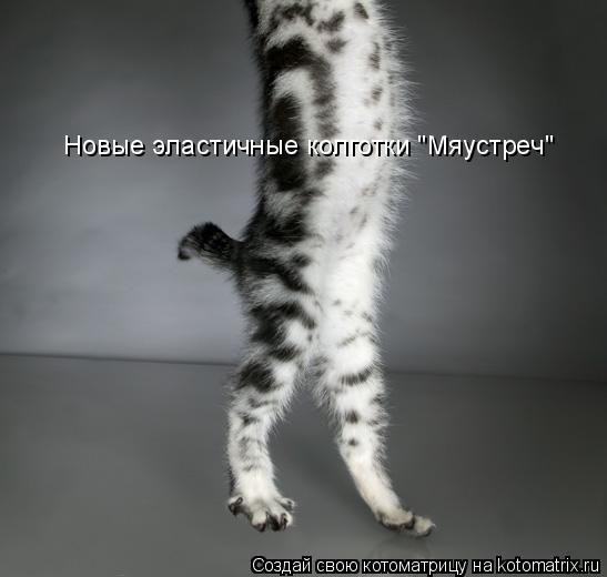 """Котоматрица: Новые эластичные колготки """"Мяустреч"""""""