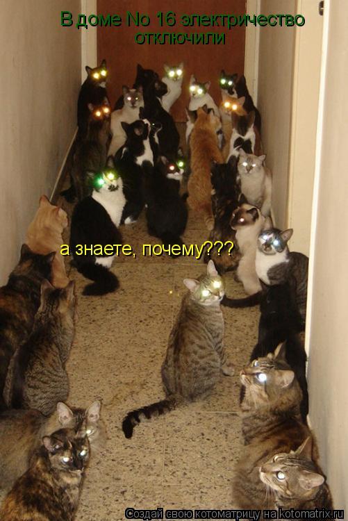 Котоматрица: В доме No 16 электричество  отключили а знаете, почему???