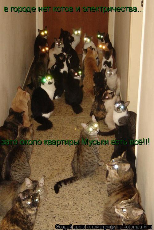 Котоматрица: в городе нет котов и электричества... зато около квартиры Муськи есть всё!!!
