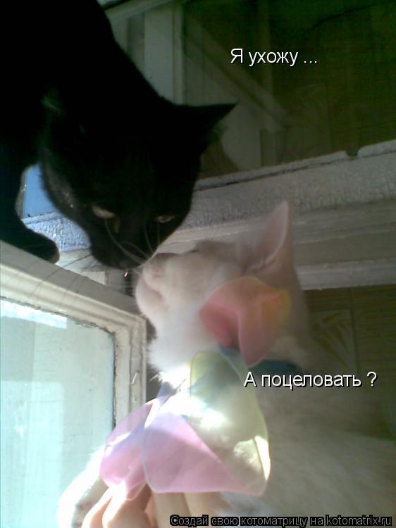 Котоматрица: А поцеловать ? Я ухожу ...