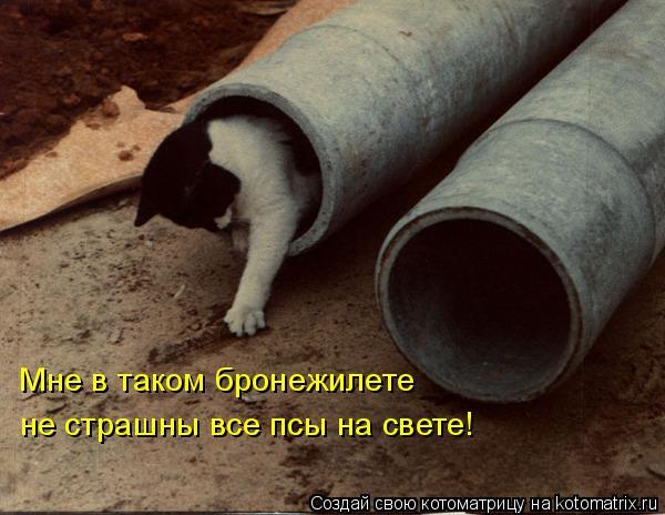 Котоматрица: Мне в таком бронежилете не страшны все псы на свете!