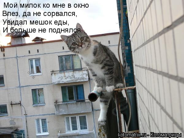 Котоматрица: Мой милок ко мне в окно  Влез, да не сорвался, Увидал мешок еды, И больше не поднялся.