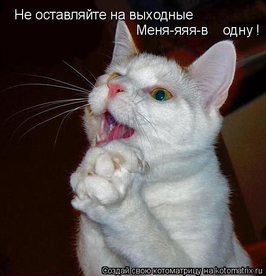 Котоматрица: Не оставляйте на выходные  Меня-яяя-в    одну !