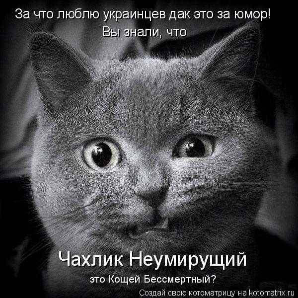 Котоматрица: За что люблю украинцев дак это за юмор! Вы знали, что Чахлик Неумирущий это Кощей Бессмертный?