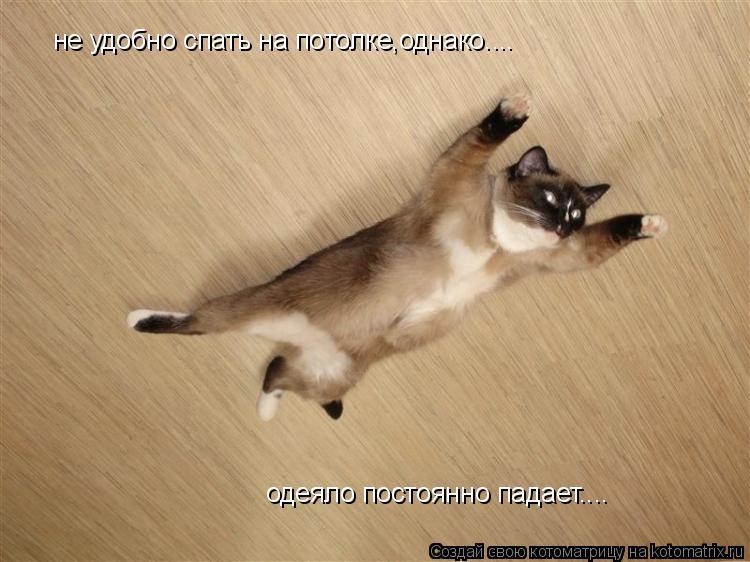 Котоматрица: не удобно спать на потолке,однако.... одеяло постоянно падает....