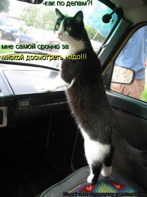 Котоматрица: -как по делам?! мне самой срочно за  миской досмотреть надо!!! миской досмотреть надо!!!