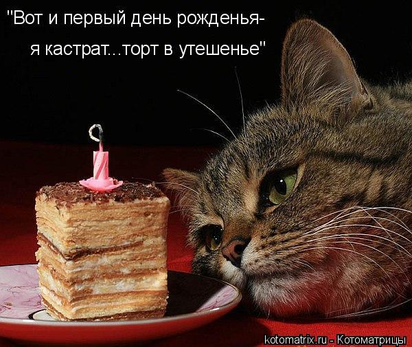"""Котоматрица: """"Вот и первый день рожденья- я кастрат...торт в утешенье"""""""