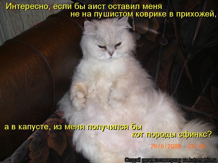 Котоматрица: Интересно, если бы аист оставил меня  не на пушистом коврике в прихожей,   а в капусте, из меня получился бы  кот породы сфинкс?