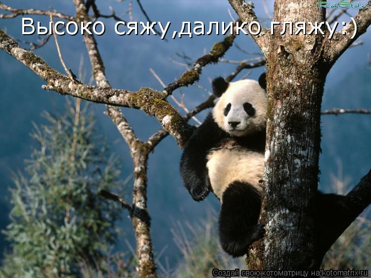 Котоматрица: Высоко сяжу,далико гляжу:)