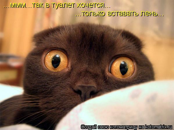 Котоматрица: ...ммм...так в туалет хочется... ...только вставать лень...