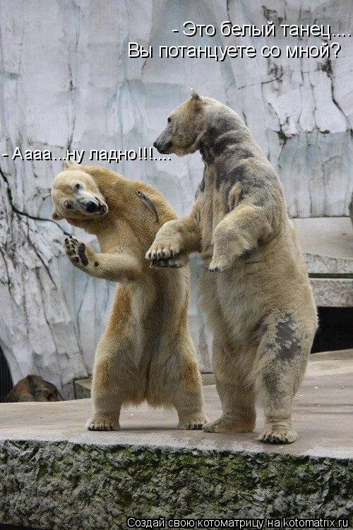 Котоматрица: - Это белый танец.... Вы потанцуете со мной? - Аааа...ну ладно!!!....