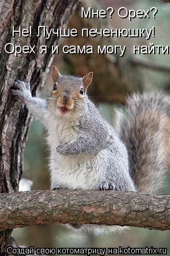 Котоматрица: Мне? Орех?  Не! Лучше печенюшку!  Орех я и сама могу  найти!