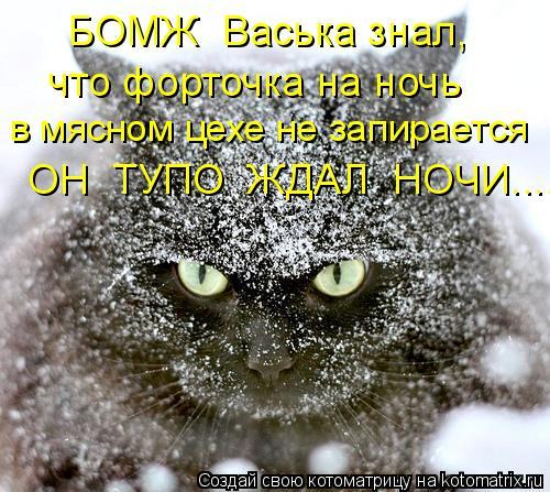 Котоматрица: БОМЖ  Васька знал, что форточка на ночь  в мясном цехе не запирается ОН  ТУПО  ЖДАЛ  НОЧИ......