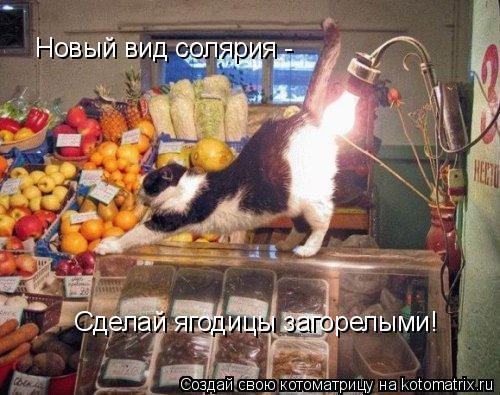 Котоматрица: Новый вид солярия -  Сделай ягодицы загорелыми!