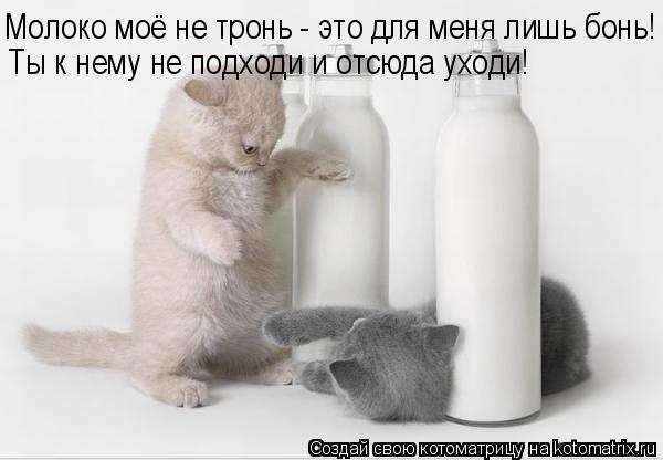 Котоматрица: Молоко моё не тронь - это для меня лишь бонь! Ты к нему не подходи и отсюда уходи!