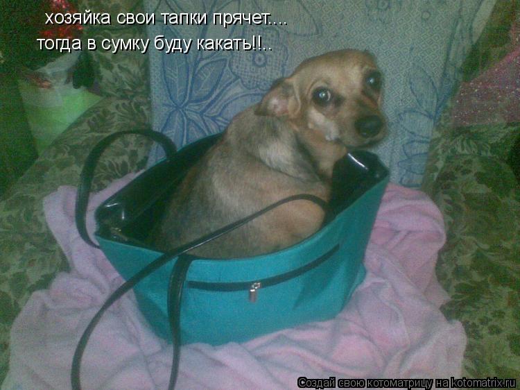 Котоматрица: хозяйка свои тапки прячет.... тогда в сумку буду какать!!..