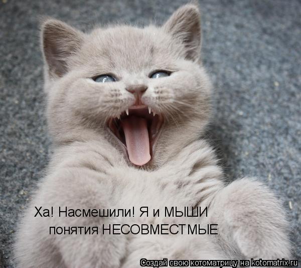Котоматрица: Ха! Насмешили! Я и МЫШИ понятия НЕСОВМЕСТМЫЕ