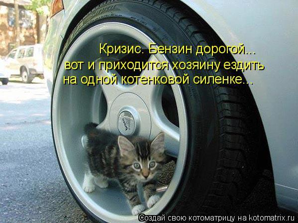 Котоматрица: Кризис. Бензин дорогой... вот и приходится хозяину ездить на одной котенковой силенке...