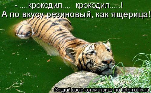 Котоматрица: А по вкусу резиновый, как ящерица!!! - ....крокодил....  крокодил.....!