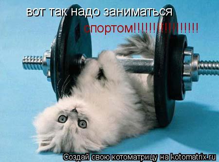 Котоматрица: вот так надо заниматься  спортом !!!!!!!!!!!!!!!!!