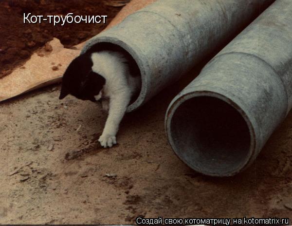 Котоматрица: Кот-трубочист