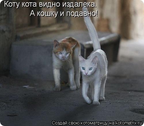 Котоматрица: Коту кота видно издалека. А кошку и подавно!