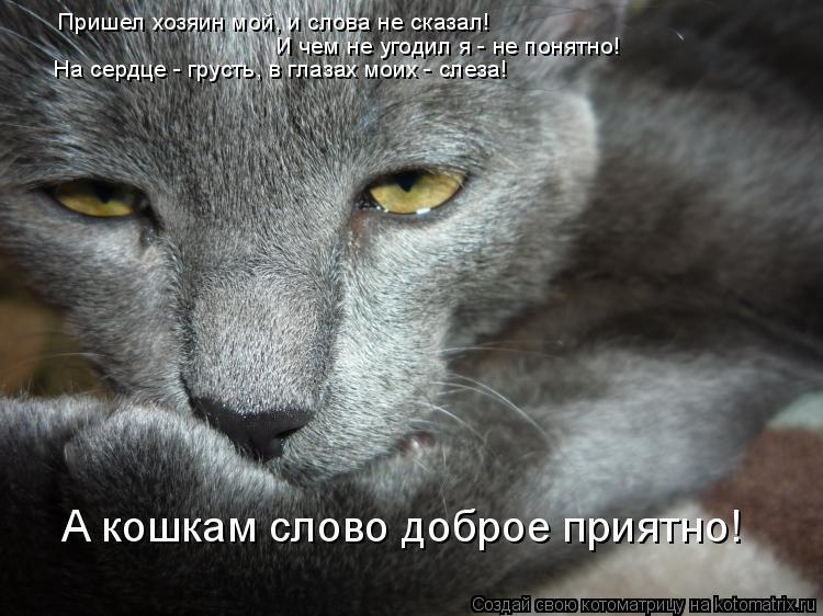Котоматрица: Пришел хозяин мой, и слова не сказал! И чем не угодил я - не понятно! На сердце - грусть, в глазах моих - слеза! А кошкам слово доброе приятно!
