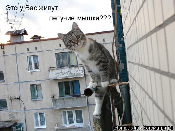 Котоматрица: Это у Вас живут ... летучие мышки???