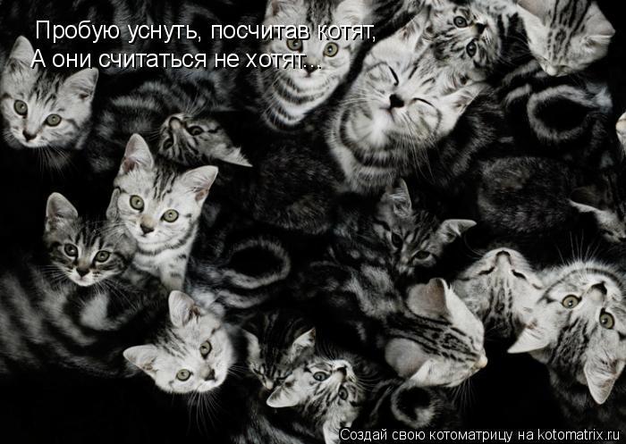 Котоматрица: Пробую уснуть, посчитав котят, А они считаться не хотят...