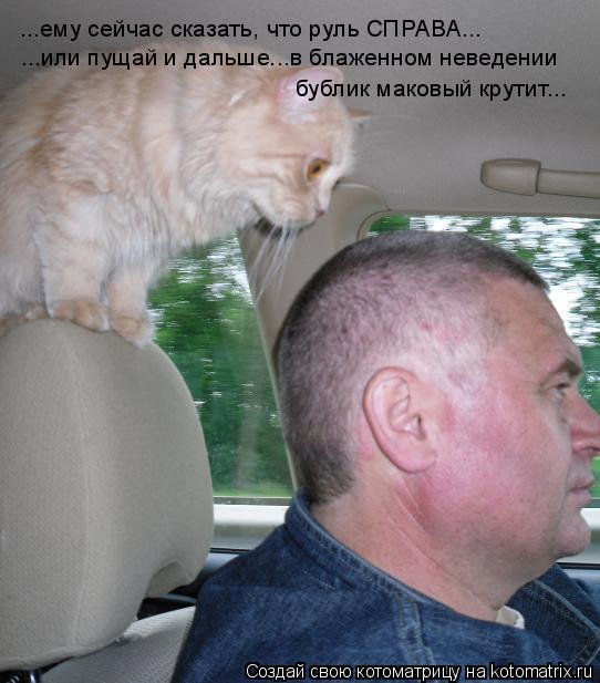 Котоматрица: ...ему сейчас сказать, что руль СПРАВА... ...или пущай и дальше...в блаженном неведении бублик маковый крутит...
