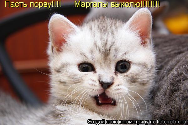 Котоматрица: Пасть порву!!!! Маргалы выколю!!!!!!!!