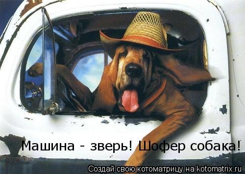 Котоматрица: Машина - зверь! Шофер собака!