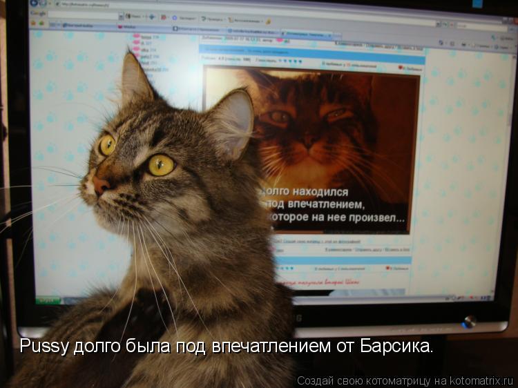 Котоматрица: Pussy долго была под впечатлением от Барсика.
