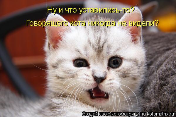 Котоматрица: Ну и что уставились-то? Говорящего кота никогда не видели?