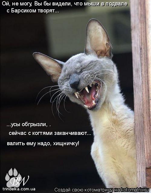 Котоматрица: Ой, не могу, Вы бы видели, что мыши в подвале  с Барсиком творят... ...усы обгрызли, .  валить ему надо, хищничку! сейчас с когтями заканчивают...