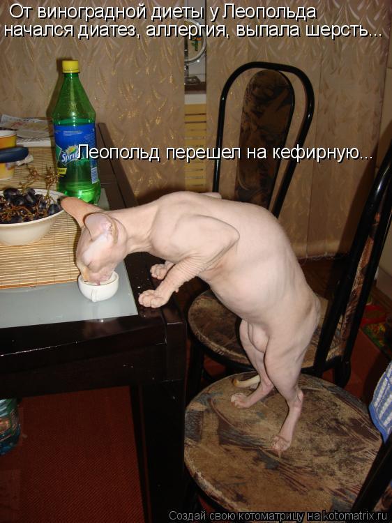 Котоматрица: От виноградной диеты у Леопольда начался диатез, аллергия, выпала шерсть... Леопольд перешел на кефирную...