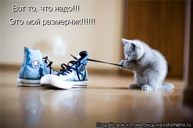 Котоматрица: Вот то, что надо!!! Это мой размерчик!!!!!!