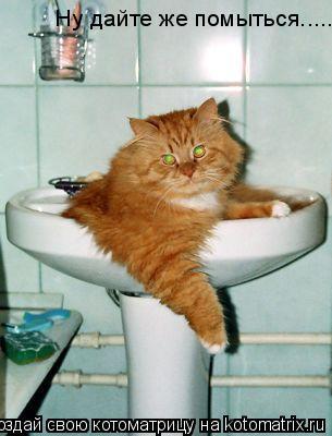 Котоматрица: Ну дайте же помыться.....