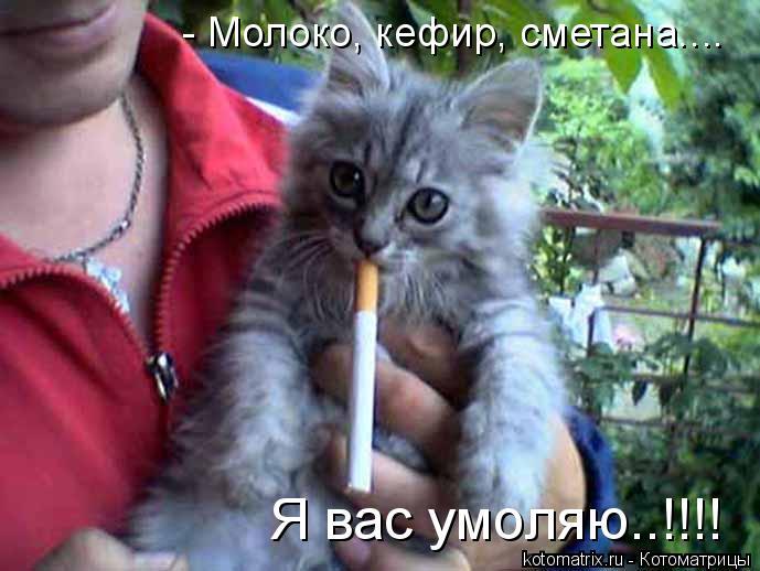 Котоматрица: - Молоко, кефир, сметана.... Я вас умоляю..!!!!