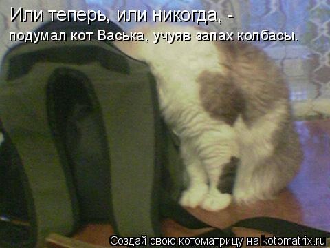 Котоматрица: Или теперь, или никогда, - подумал кот Васька, учуяв запах колбасы.